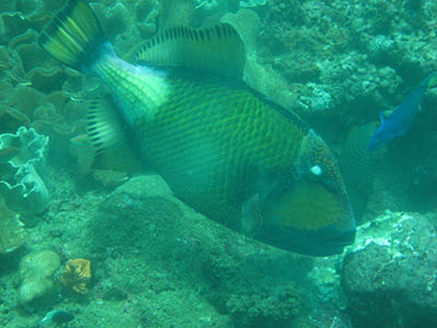 Mugged by a Trigger Fish